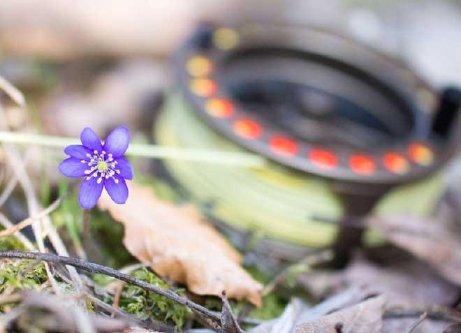 Blume und Fliegenrolle am Förchensee