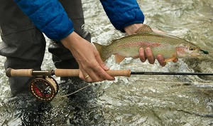 trout_spey_refo