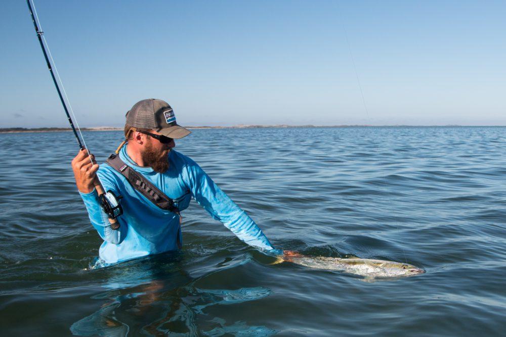 Yellowtail Kingfish bei der Landung